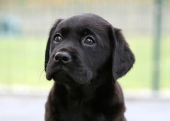 Compare Holiday Money Sponsors Guide Dogs Puppy Eddie - Featured Image