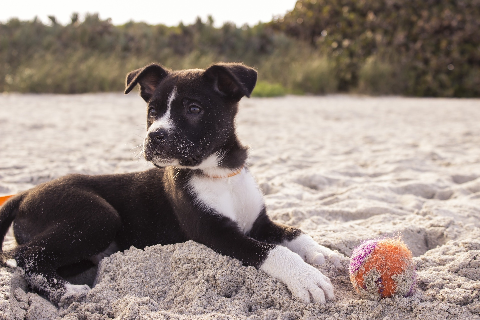 Thinking of Taking Your Pet Abroad? Here's What You Need to Know