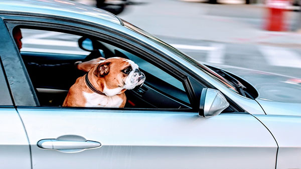 how-best-to-travel-with-your-pet-dog-in-car-image