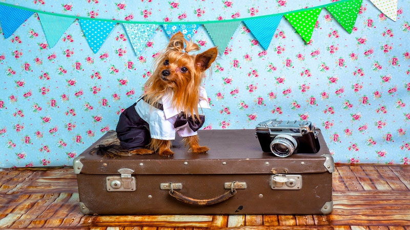 how-best-to-travel-with-your-pet-feature-image